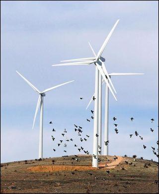 Turbine-and-birds
